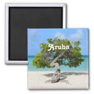 Árvore de solo de Divi Divi em Aruba Ímã Quadrado