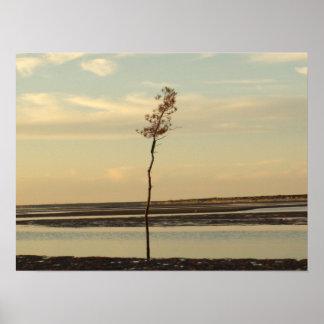 Árvore de solo na imagem da praia de Cape Cod Pôster