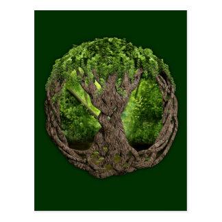 Árvore de vida celta cartões postais
