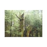 Árvore de vida impressão de canvas esticadas