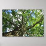 Árvore de vidoeiro de Sweden. Impressão
