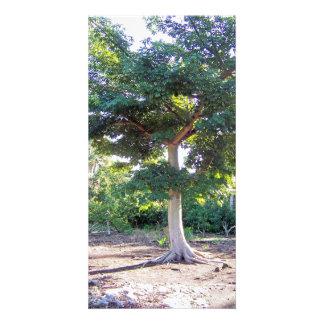 Árvore do cartão da Sabedoria-foto Cartão Com Foto