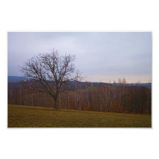 Árvore do outono impressão fotográfica