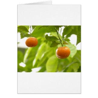 Árvore e frutas de mandarino cartao