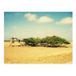 Árvore girada cartão postal