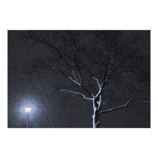 Árvore preta & branca do inverno da paisagem