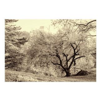 Árvore preta & branca do inverno da paisagem na arte de fotos