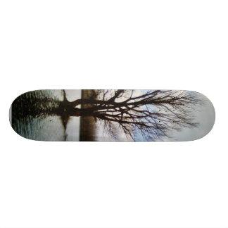 Árvore sozinha na água shape de skate 20cm