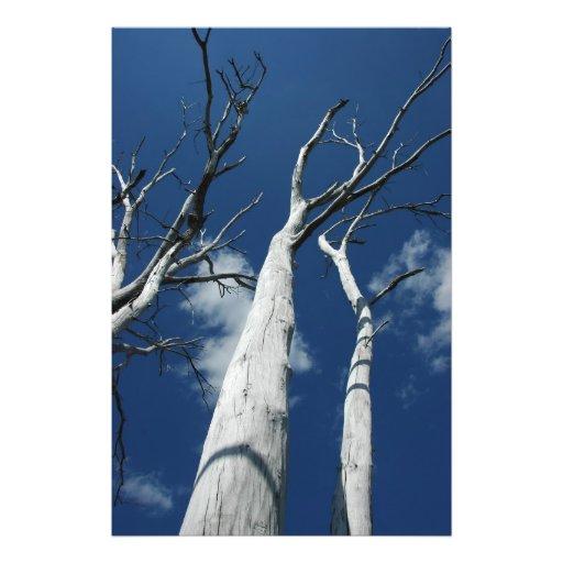 Árvores brancas contra o céu azul foto artes