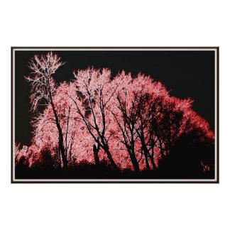 Árvores cor-de-rosa impressão de foto