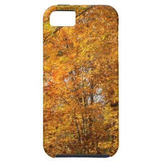 Árvores da queda capas para iPhone 5