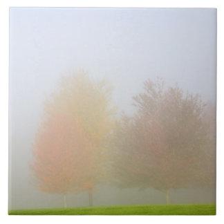 Árvores da queda encobertas na névoa