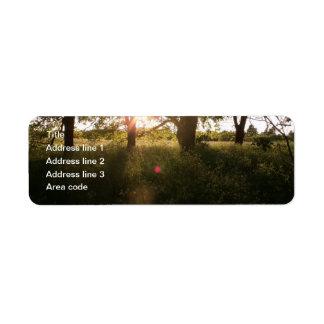 Árvores da silhueta & etiquetas de endereço do