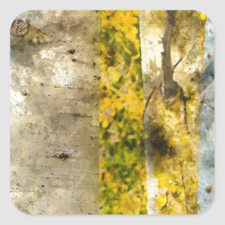 Árvores de Aspen no outono Adesivo Quadrado