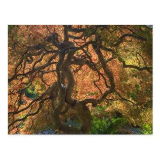 Árvores de bordo da cor do outono, Victoria, Cartão Postal