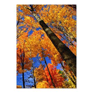Árvores de bordo da queda convite 12.7 x 17.78cm