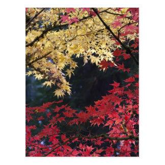 Árvores de bordo na cor do outono cartão postal