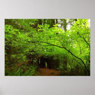 Árvores de bordo no parque nacional da floresta da poster