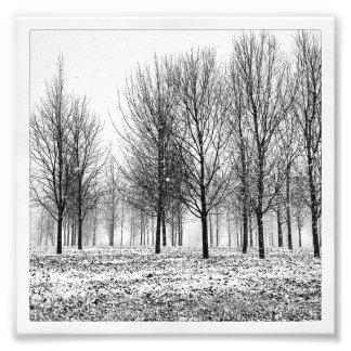 Árvores do inverno impressão de foto