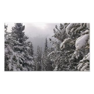 Árvores e neve impressão de foto