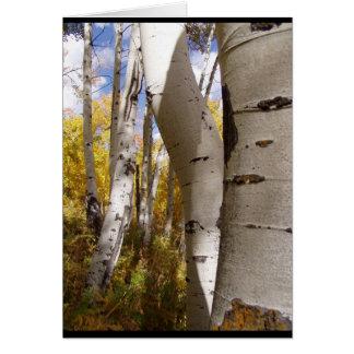 árvores em Jackson Hole Cartão
