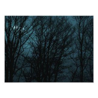 Árvores escuras impressão fotográfica