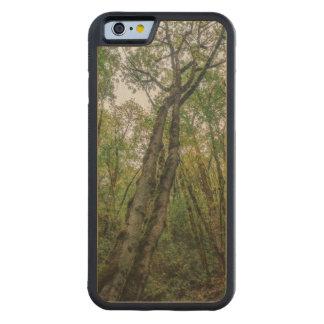 Árvores Mossy no noroeste pacífico Capa De Madeira De Bordo Bumper Para iPhone 6