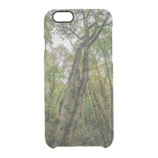 Árvores Mossy no noroeste pacífico Capa Para iPhone 6/6S Transparente