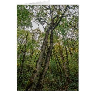 Árvores Mossy no noroeste pacífico Cartão
