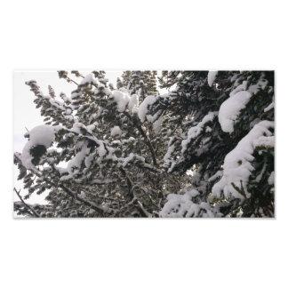 Árvores nevado impressão de foto