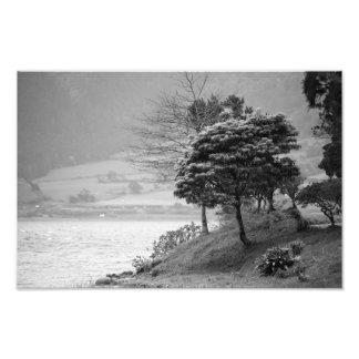 Árvores pelo lago impressão de foto
