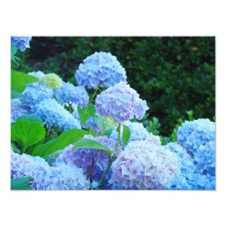 As canvas fotográficas imprimem flores azuis do impressão de foto