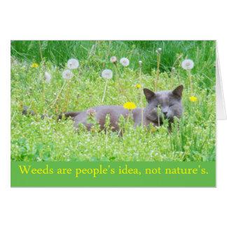 """As """"ervas daninhas são a ideia do pessoa…""""  Cartão"""