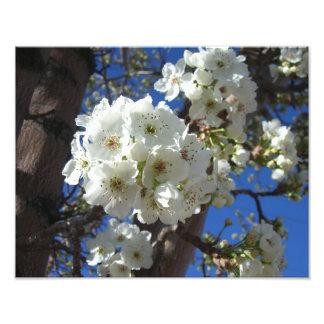 As flores brancas eu salto floral impressão de foto
