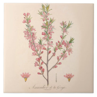 As flores da amêndoa imprimiram a decoração da