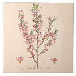 As flores da amêndoa imprimiram a decoração da azulejo quadrado grande