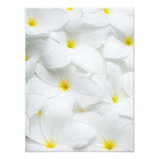 As flores dos leus do Plumeria personalizaram a Artes De Fotos