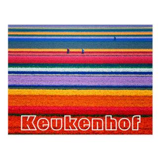 As flores na mostra do Dutch de Keukenhof jardinam Cartão Postal