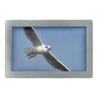 As gaivotas são pássaros bonitos