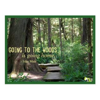 As madeiras (olimpiadas N.P.) Cartão Postal