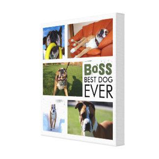As melhores canvas da colagem da foto do cão nunca