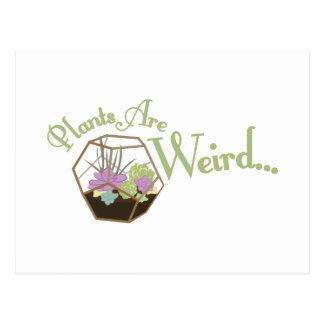 As plantas são estranhas cartão postal