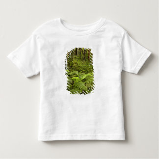 As samambaias e o arbusto nativo perto de Matai T-shirts