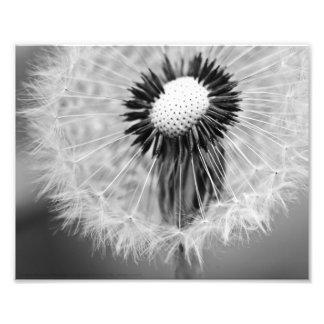 As sementes de amanhã impressão de foto