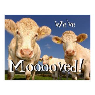 As vacas engraçadas nós movemos o cartão novo do
