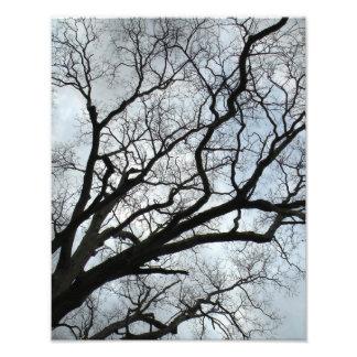 As veias da árvore impressão de foto