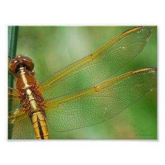 Asas amarelas da libélula artes de fotos