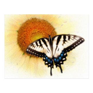 Asas de Butterflys, cartão