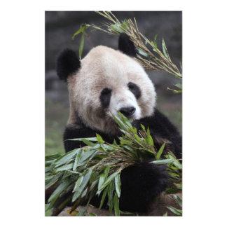 Ásia, China Chongqing. Panda gigante nos 2 Impressão De Foto
