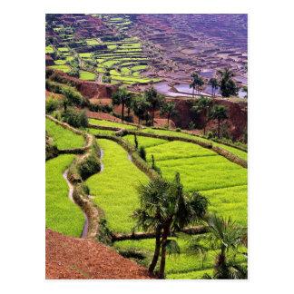 Ásia, China, Yunnan, Honghe.  Os terraços do arroz Cartão Postal